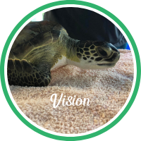 Open Vision's sea turtle patient profile.