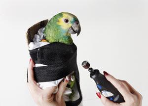 Avian Restraint Jacket